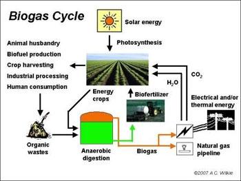 biodiesel plant business plan