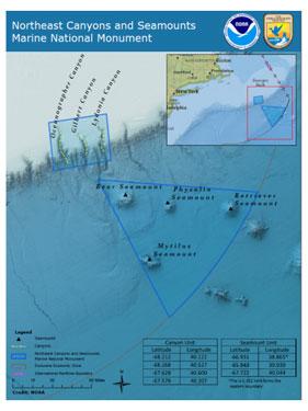 Whales & Deep Sea Fish Protected in Obama's Atlantic Ocean Marine Preserve