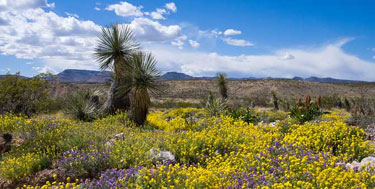 President Obama Protects 500,000 Acres in New Mexico