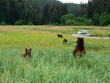 Alaska's Tongass Wilderness Will Remain Untouched, Says Supreme Court