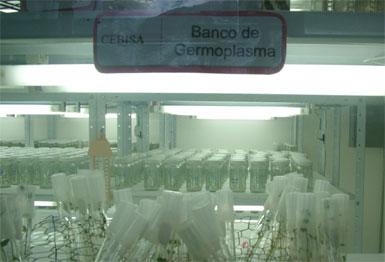 Venezuela Outlaws GMOs, Moves Toward Organic Agriculture