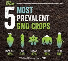 GMO3.jpg