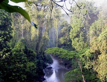 In Spite of Zero Deforestation Pledges, Fires Rage in Indonesia