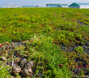 Ford Motor's 10-Acre Green Roof Launched an Industry