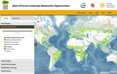 Forest-Restoration-Map.jpg