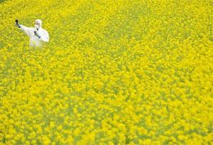 GMO1.jpg