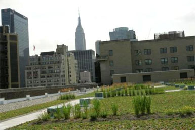Green-Roof-USPS.jpg