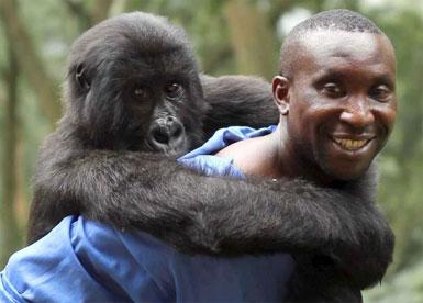 Virunga.jpg