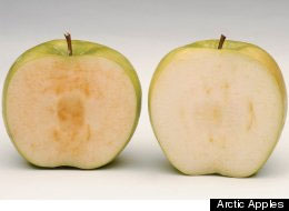 GMO News: Arctic Apple and Enogen Corn
