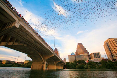 Top 10 Cities for Wildlife in the US