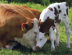 Walmart Releases Surprisingly Wonderful Farm Animal Policy