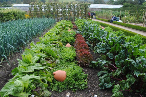 The Next Trend In Landscape Design Foodscapes Sustainable Business