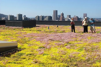 Walmart Turns Green Roofs Into Research Labs