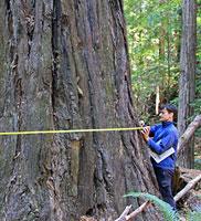 redwood-final.jpg